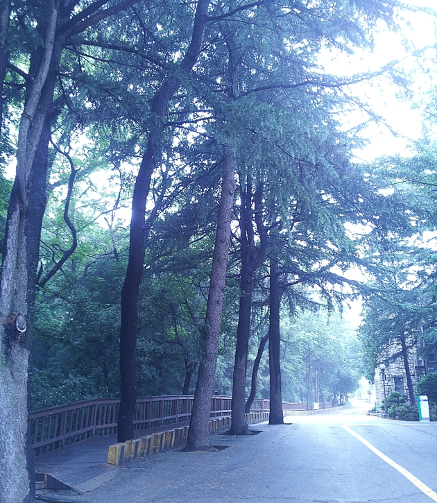 A path heading to Pusan National University' Library 1