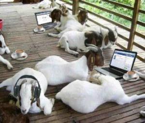 Si kambing masih bisa update status sampe besok pagi :D