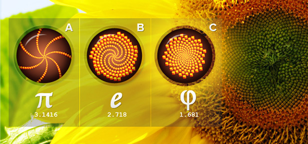 Sunflower Spirals (http://www.dcmedia-design.com/blog/10-website-design-principles-via-dieter-rams/)