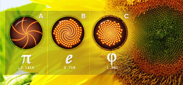 Sunflower Spirals (http://www.dcmedia-design.com/blog/10-website-design-principles-via-dieter-rams/)