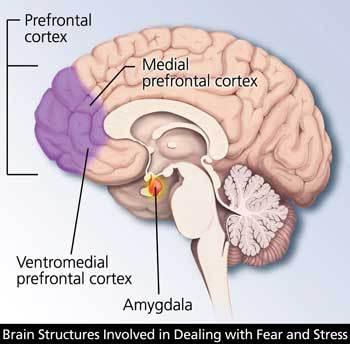 struktur otak